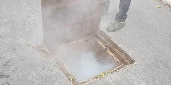 disinfestazione e derattizzazione a roma tile 2 globo services